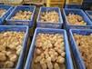 梅州小三黃雞苗基地直銷