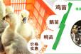 临沧灵山土鸡批发市场