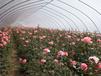 泉州花卉大棚厂家