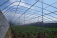 重慶日光溫室大棚建造成本