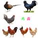 襄陽鴨苗孵化基地-龍華里有賣雞苗的