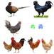 杭州小雞苗孵化基地