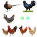 廣州肉雞苗廠家