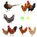 紹興鴨苗孵化場-廣東三水雞苗孵化場