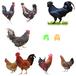蘇州蛋雞苗批發市場