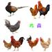 鄂州土雞苗批發價格-湖北咸寧雞苗孵化廠