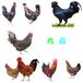 杭州土雞苗批發價錢-山東雞苗怎樣的價格