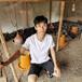 廣州土雞苗孵化基地