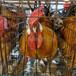 阿勒泰鴨苗價格-侯馬有沒有雞苗孵化場