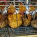 南平蛋鸡苗孵化基地