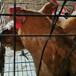 嘉興鵝苗價格行情-鄱陽謝家灘雞苗孵化