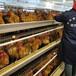 阿勒泰小雞苗市場價格