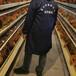 龙岩肉鸡苗市场价格