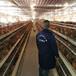 三明土鸡苗价格走势-兴义珍珠鸡苗养殖场