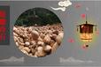 云南昆明園林景觀黃蠟石,刻字石觀景石批發