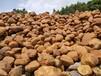 福建三明黃蠟石,發往各地黃蠟石景觀石