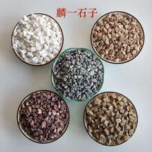 白色石子灰色卵石水洗石红色石子各种规格黑色石子图片