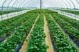 呂梁交口縣育苗溫室水頭鎮農業蔬菜棚