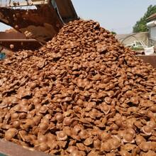 揚州黏土球廠家價格圖片