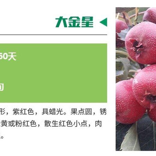 棉球山楂苗包運輸品種介紹