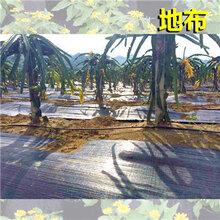 猕猴桃园防草布花园除草布抗老化防草布防草布特点图片