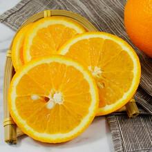 東莞臍橙團購圖片