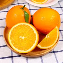 上海贛南臍橙團購圖片