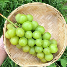 杭州無籽葡萄產地批發圖片