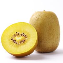 武漢獼猴桃新西蘭金果批發圖片