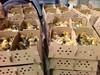 2020年7月13日鸡苗市场行情鸡苗报价每日更新信息
