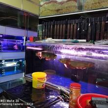 東營圖樂智能水族魚缸免換水過濾器
