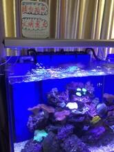 圖樂智能水族科技有限公司日本TOTTO生物水族株式會社駐中國總部