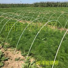 河北润泽供应可定制花卉蔬菜育苗棚拱杆农用大棚支架杆图片