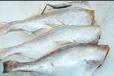 東營魚類去皮機批發價格