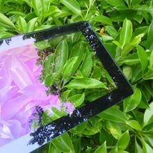 上海不反光高透玻璃定做厂家图片