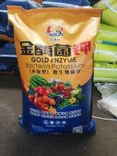 山东济宁市厂家直销金酶菌钾微生物冲施型菌剂图片