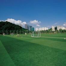 河源足球場圖片