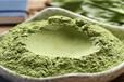 河南菠菜粉(脫水蔬菜粉)生產廠家批發零售產地直銷