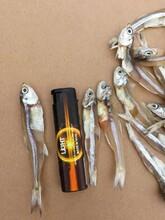 北海白公魚干水晶魚干批發圖片