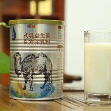 暢哺初乳益生菌配方駝奶粉全國招代理可貼牌代工