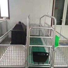 滄州眾悅定位欄產床保育床漏糞板養豬設備