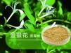 山西瑜萊生物金銀花提取物綠原酸基本信息