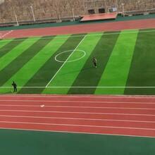 公司承接學校塑膠跑道人造草坪籃球場工程項目施工