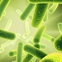 益生菌粉固體飲料粉劑OEM/ODM定制貼牌低門檻加工