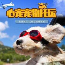 广州太原西安北京至全国猫狗兔宠物托运图片