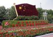 徐州五色草造型基地直銷