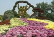 安徽菊花造型种植技术