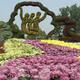 陕西菊花造型图