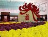 上海菊花造型种植价格