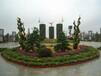 三門峽菊花造型種植價格